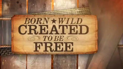 Born Wild Created To Be Free Film