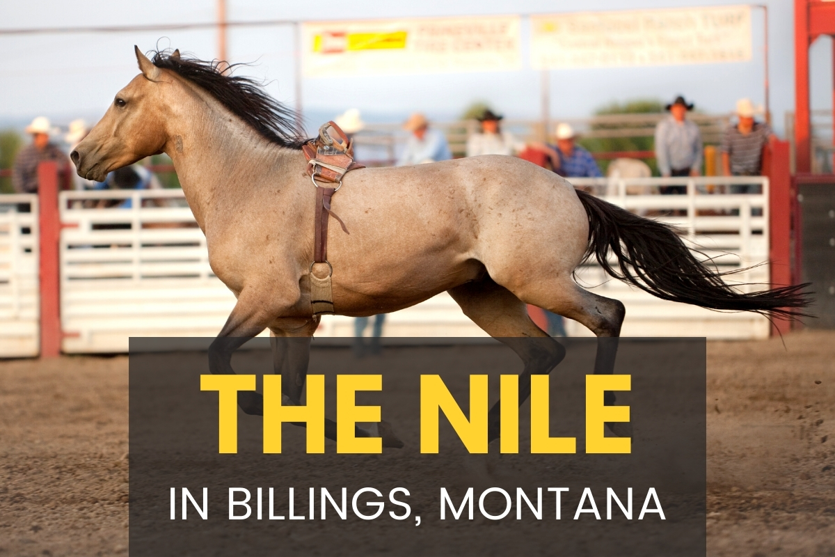 The Nile In Billings Montana