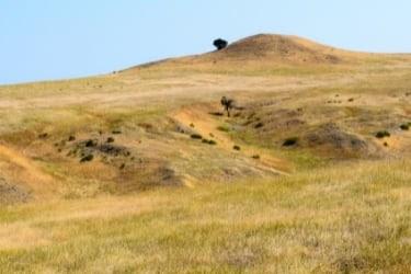 Bighorn Battlefield National
