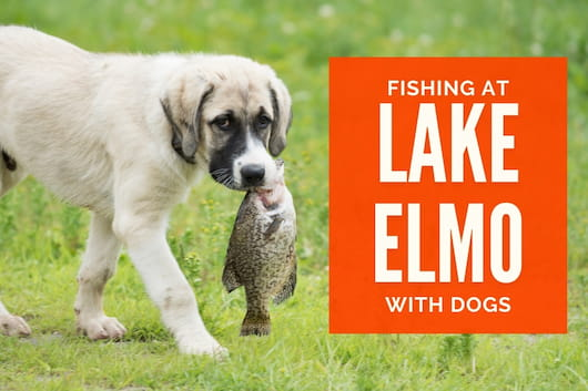 Fishing at Lake Elmo with Dogs - Dog with a fish