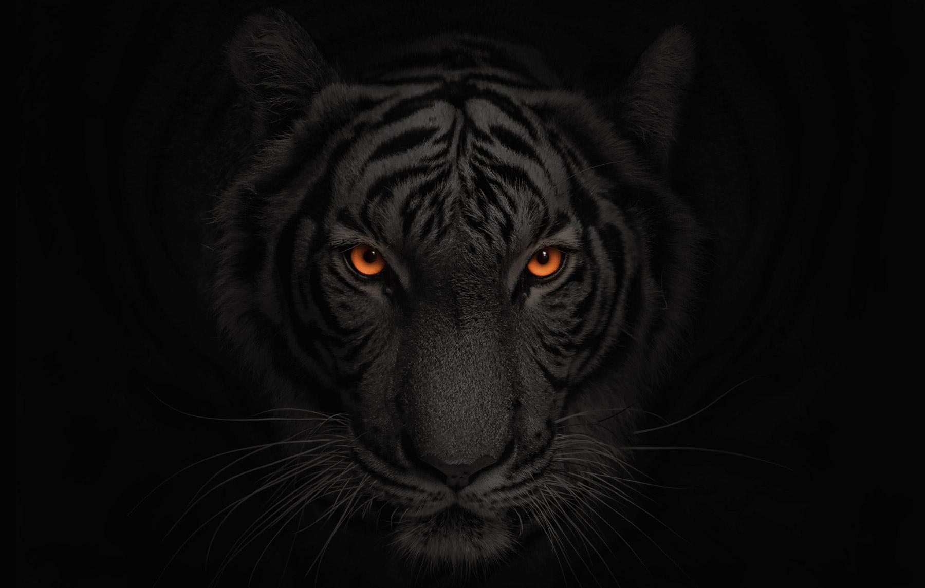 White Tiger with Orange eye with  Dark gradient overlay, Decorative