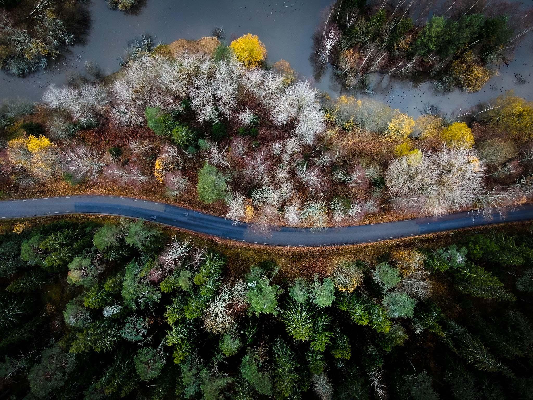 drönarbild över väg på hösten