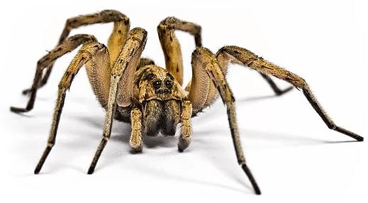 Yellow spider on white background