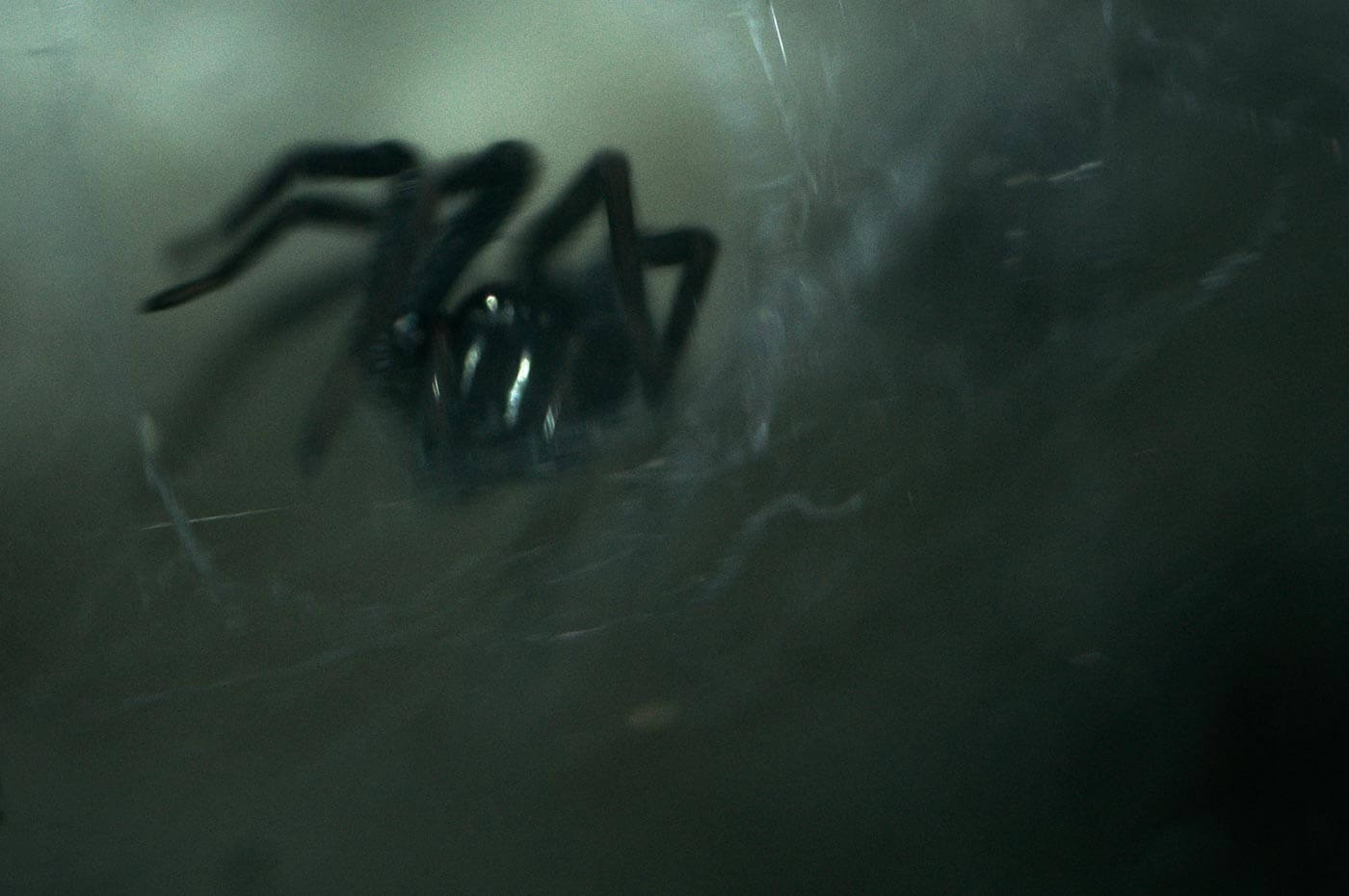 Spider in a dark background