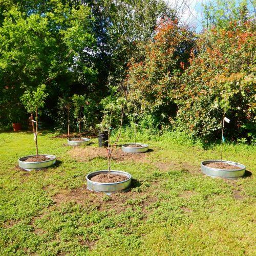 Martin Tree Planting