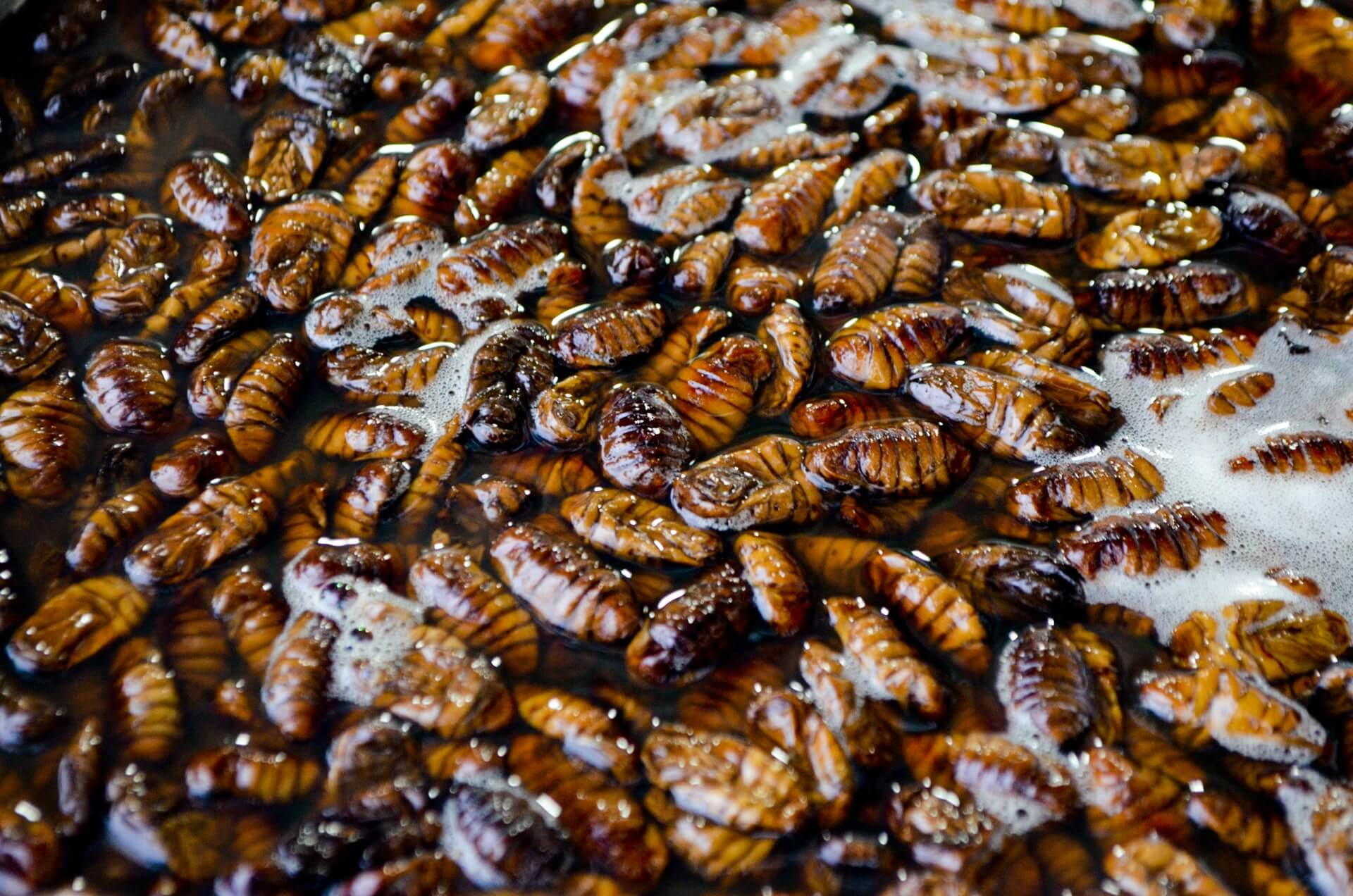 When to call a pest controller for roaches