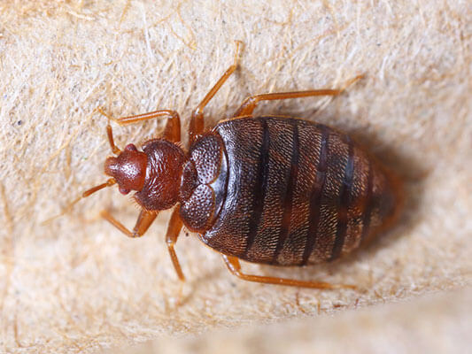 A guide of what to do after bed bug treatment