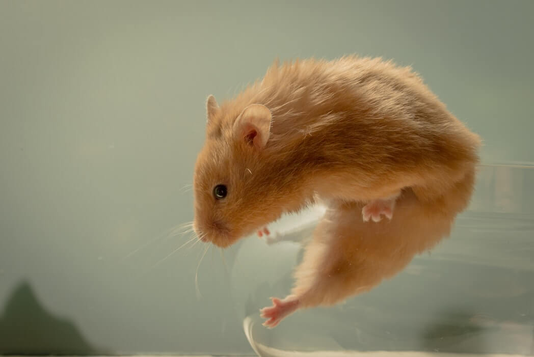 What is the best way to keep rodents out of the house?