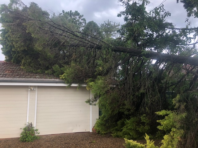A storm damaged tree hanging over a house