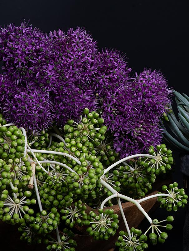 Paars en groene planten