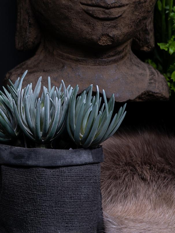 Boeddha beeld en groene planten