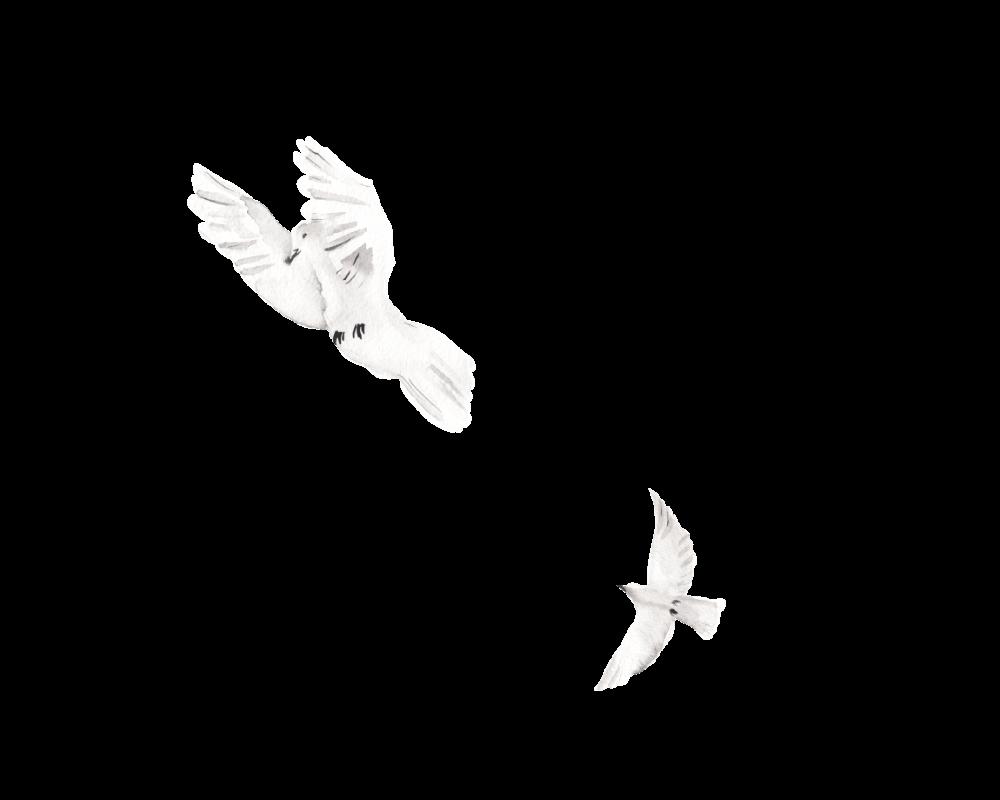White birds accent image