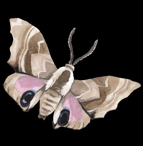 Moth decorative image