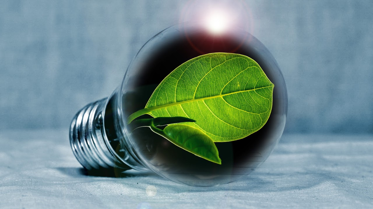image of leaf inside of light bulb save the environment