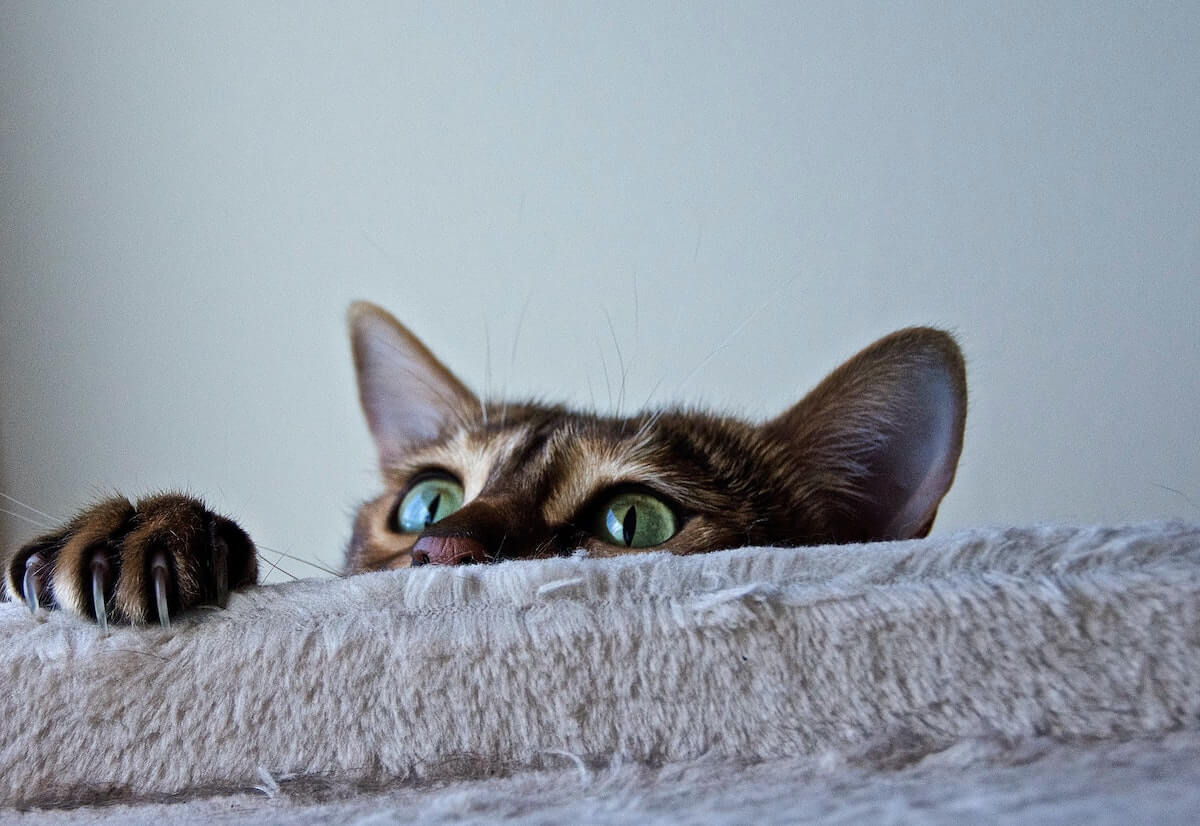 What You Need to Know about Pet Spots and Odor