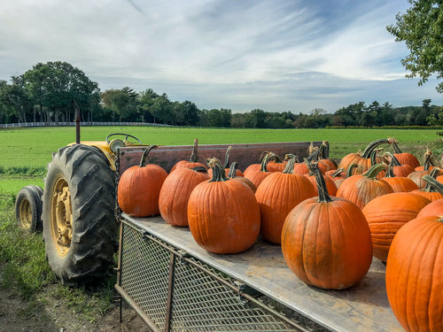Pumpkins on the Move