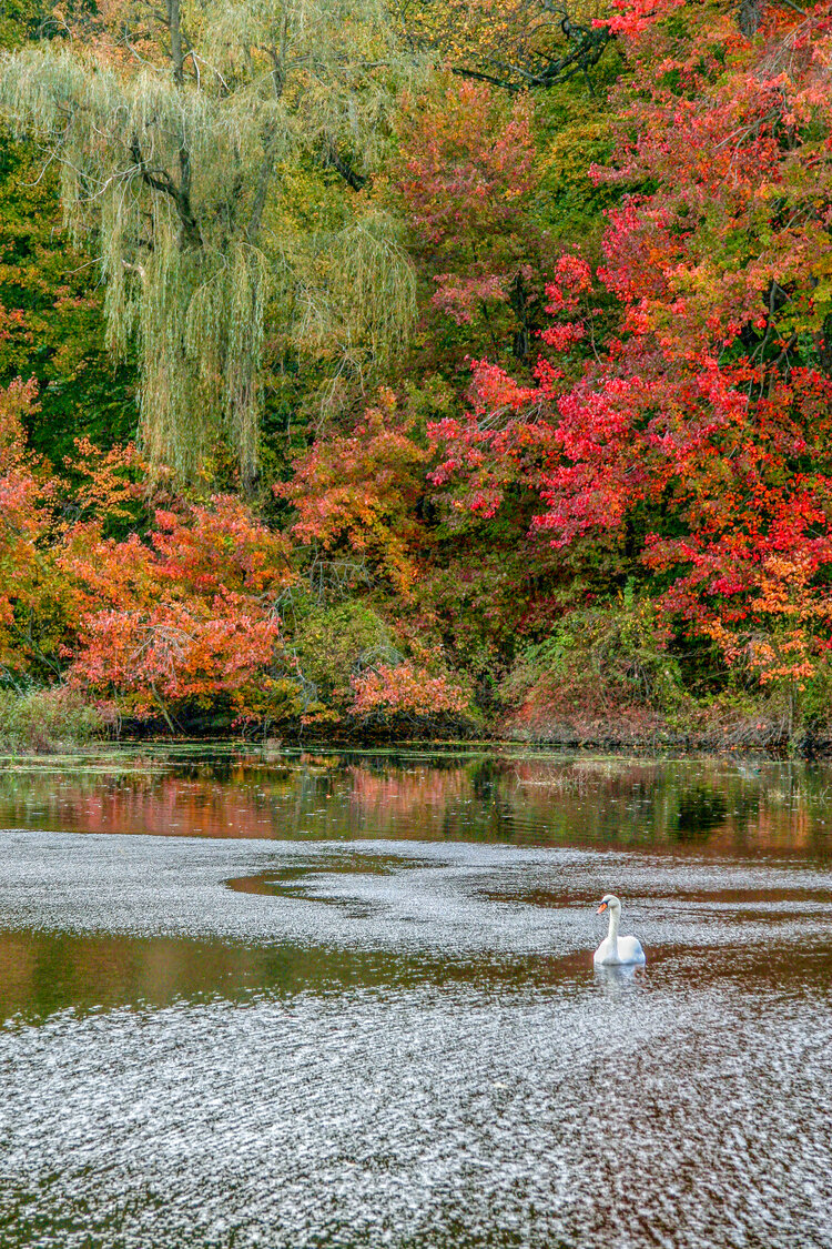 Crimson Dappled Autumn
