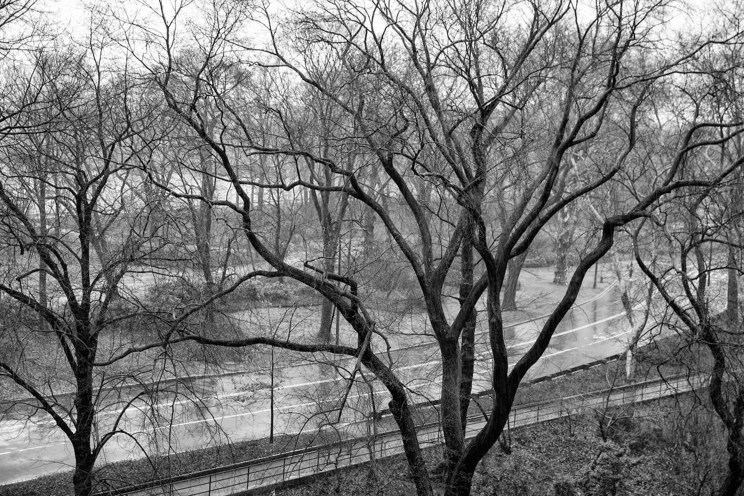 Winter Trees, Central Park
