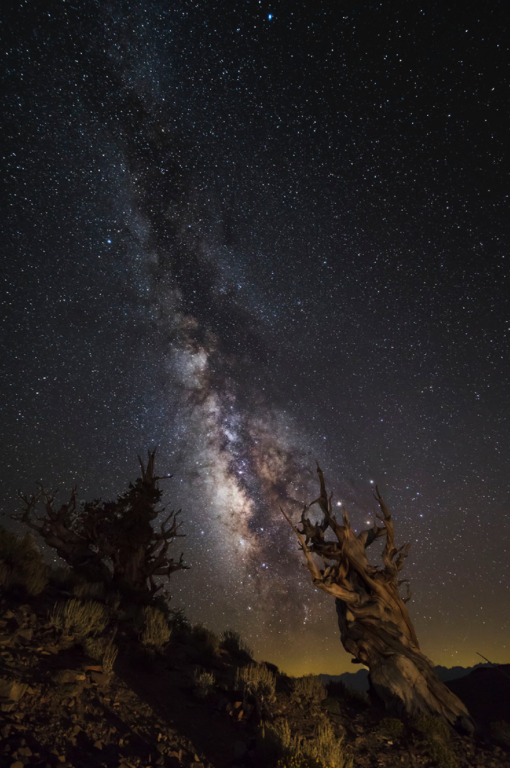 Bristlecone Pine Forest at Night by Kevin Ferris