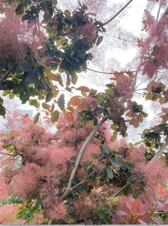 Smoke Tree 1 by Susie Gilbert