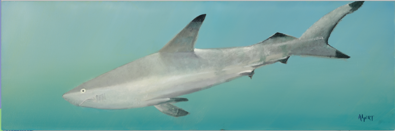 Sandy Shark by Steve Alpert