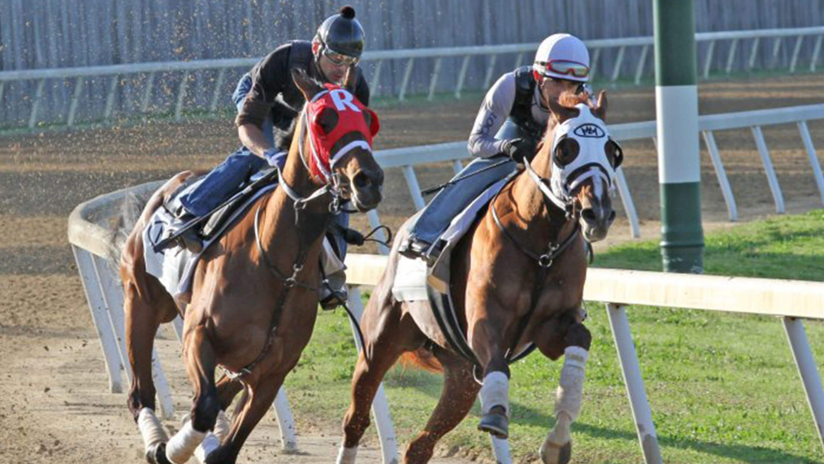 Two jockies racing horses