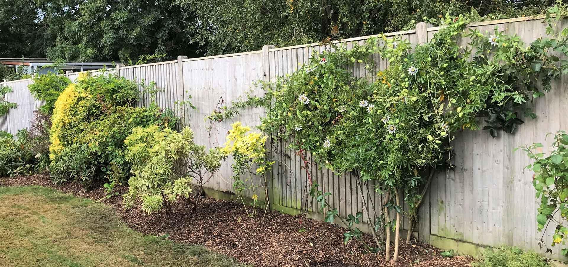 garden and garden plants