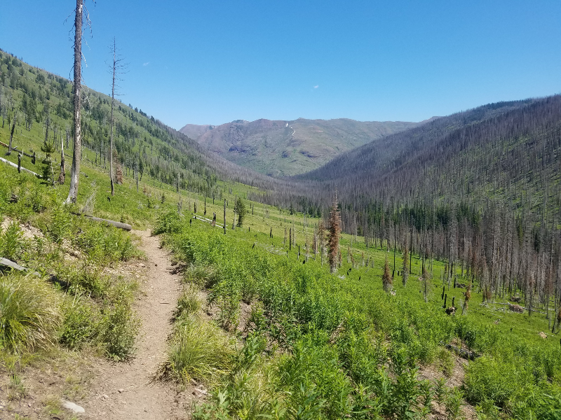Open Single Track with Alpine Running Guides