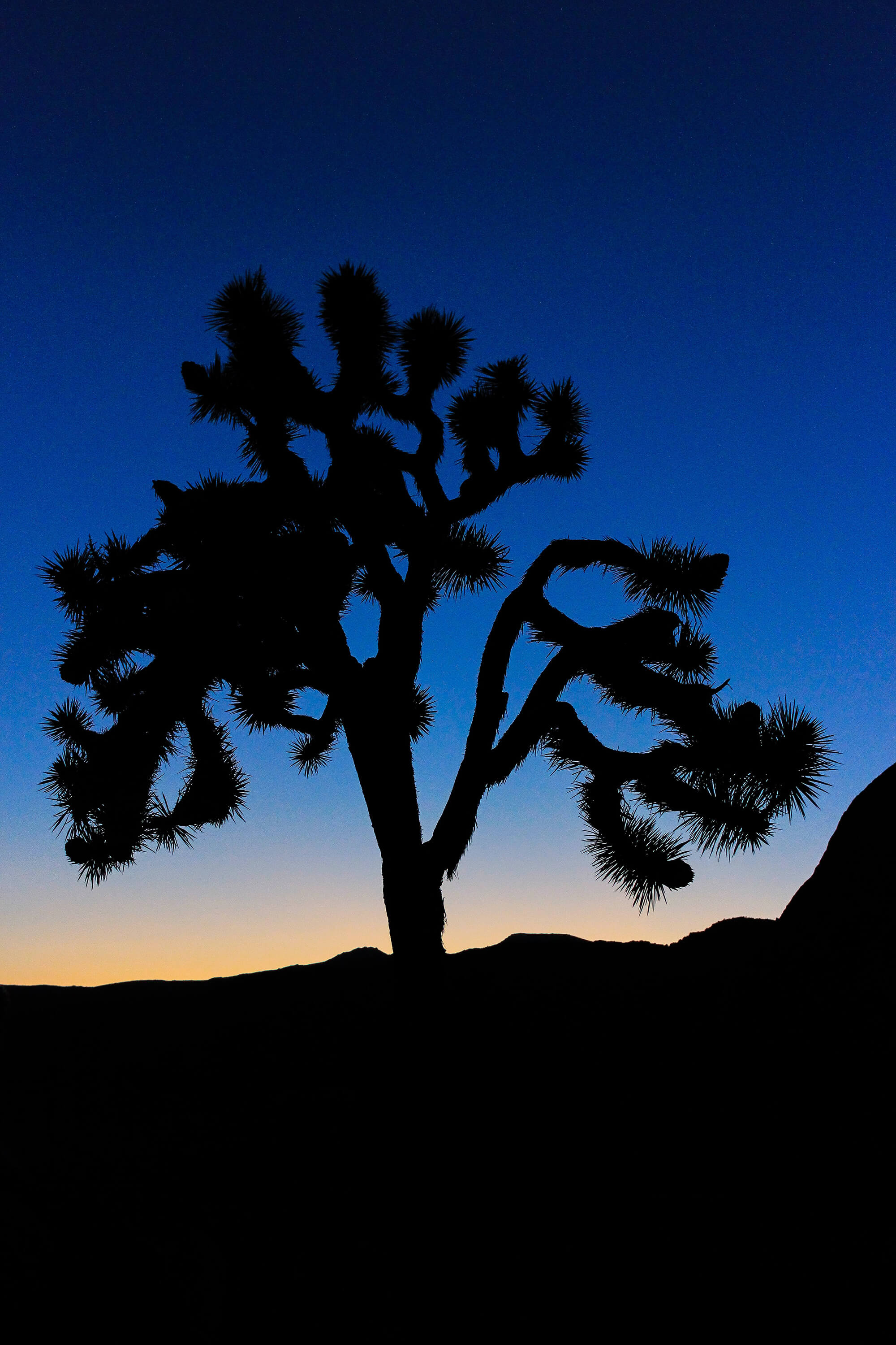 Joshua Tree Vertical