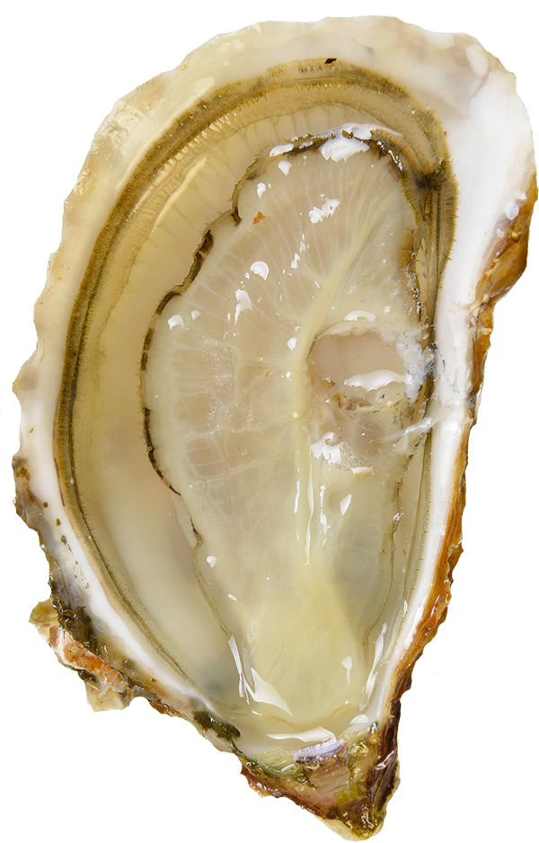Armstrong Oysters