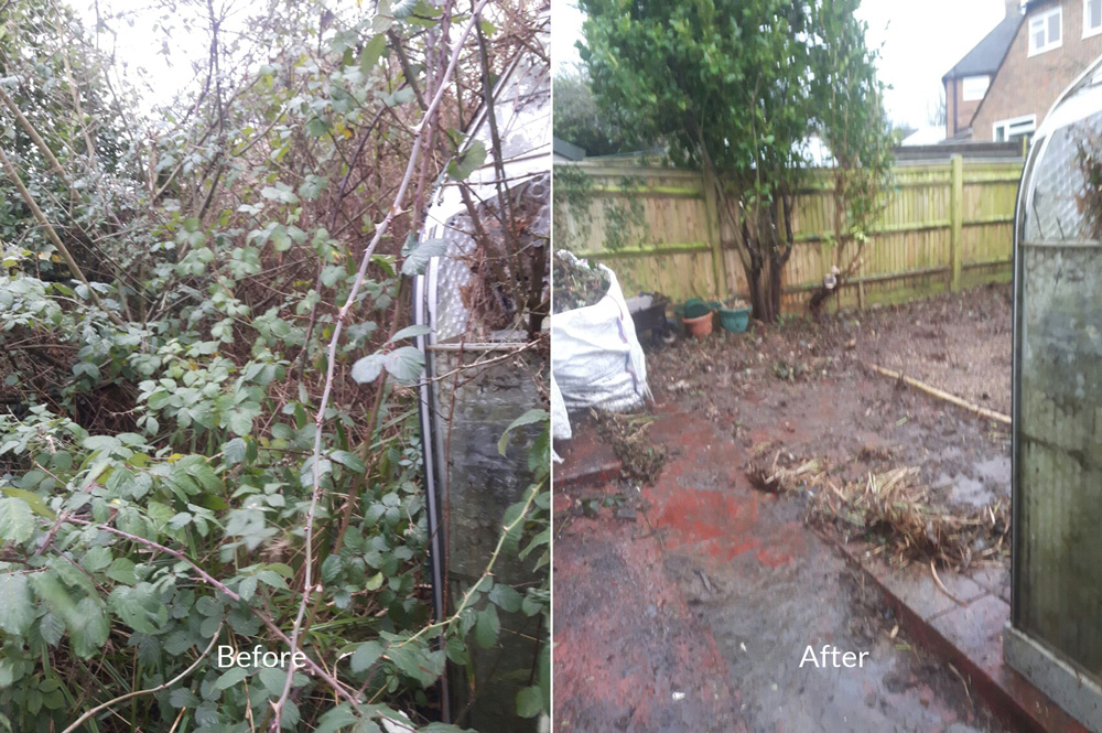 garden clearance before and after