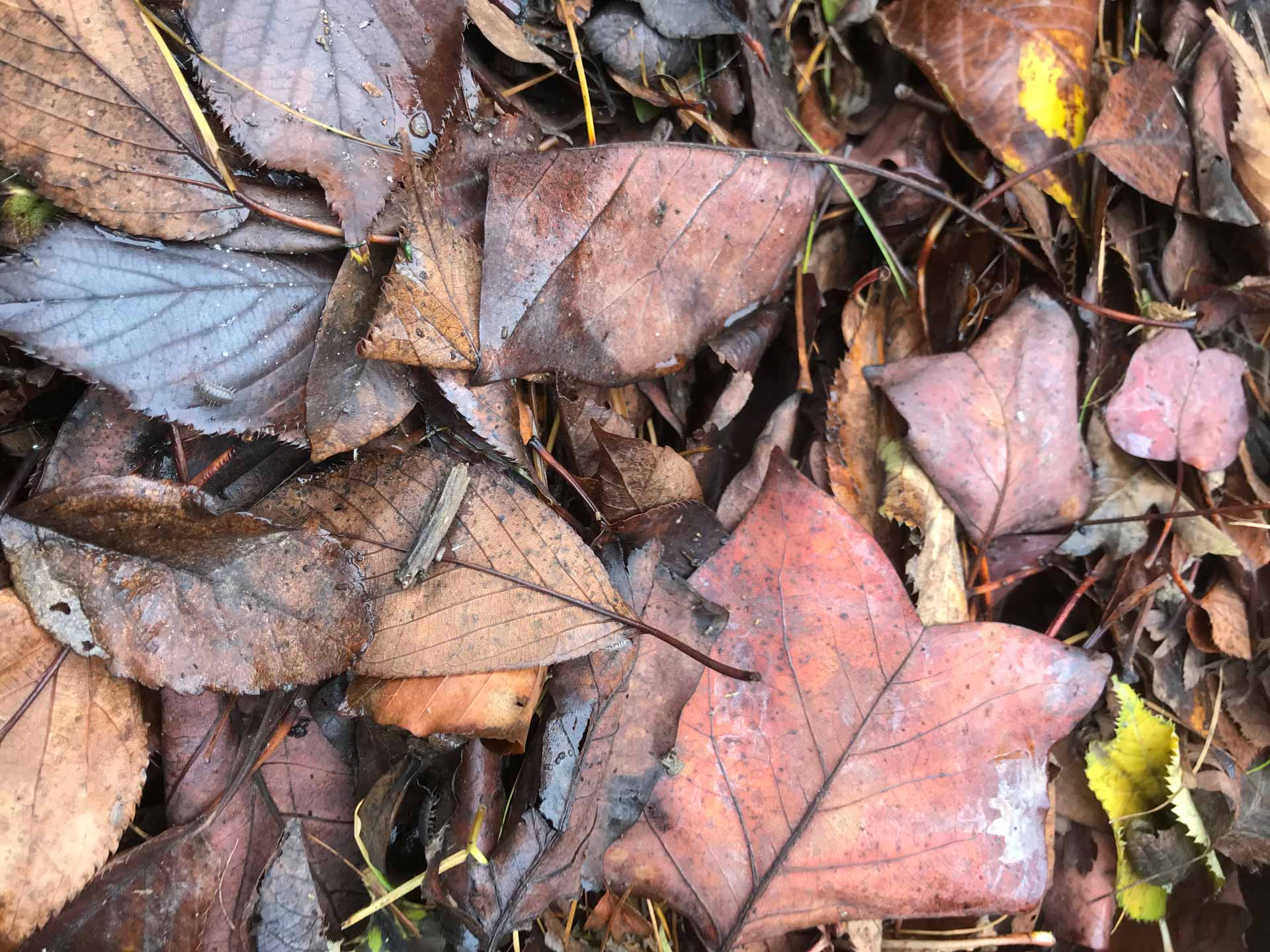 brown and red leaves on the ground