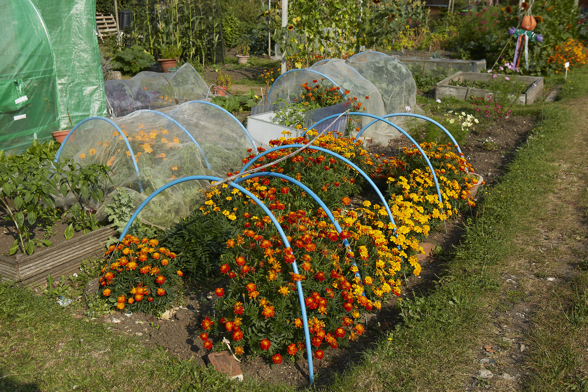 Henley Town Council - Healthy allotment in Henley