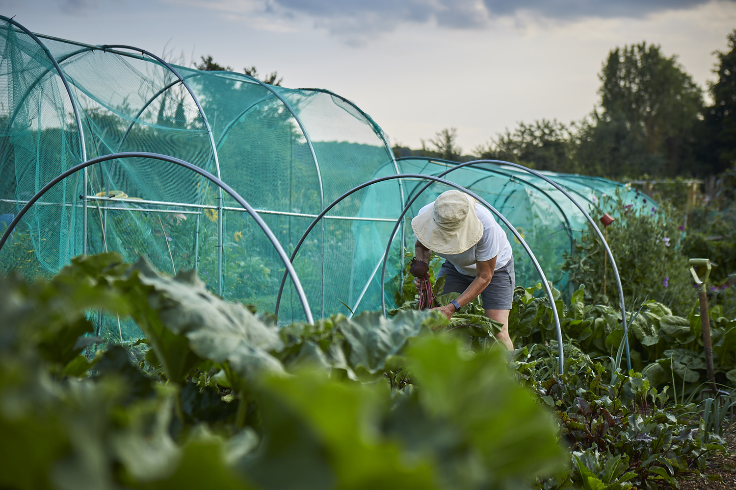Henley Town Council - Henley allotments on a sunny day