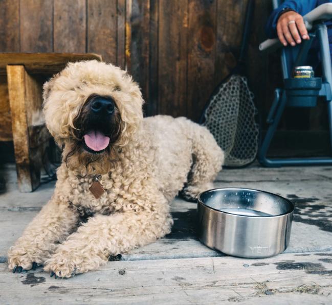 Boomer Dog Bowl