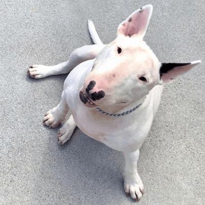 Dog Thumbnail