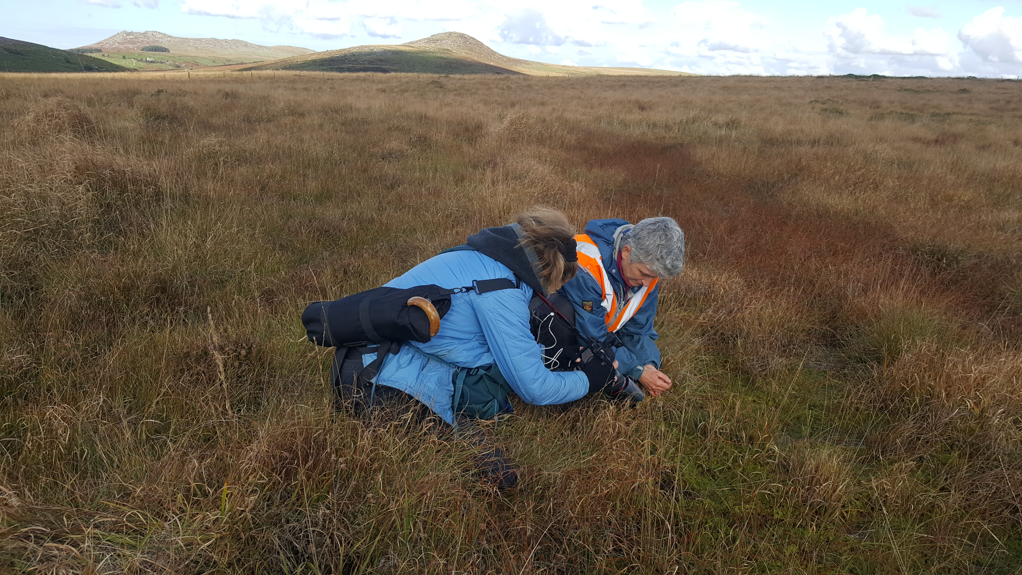 Cornwall Climate Care - on the moor