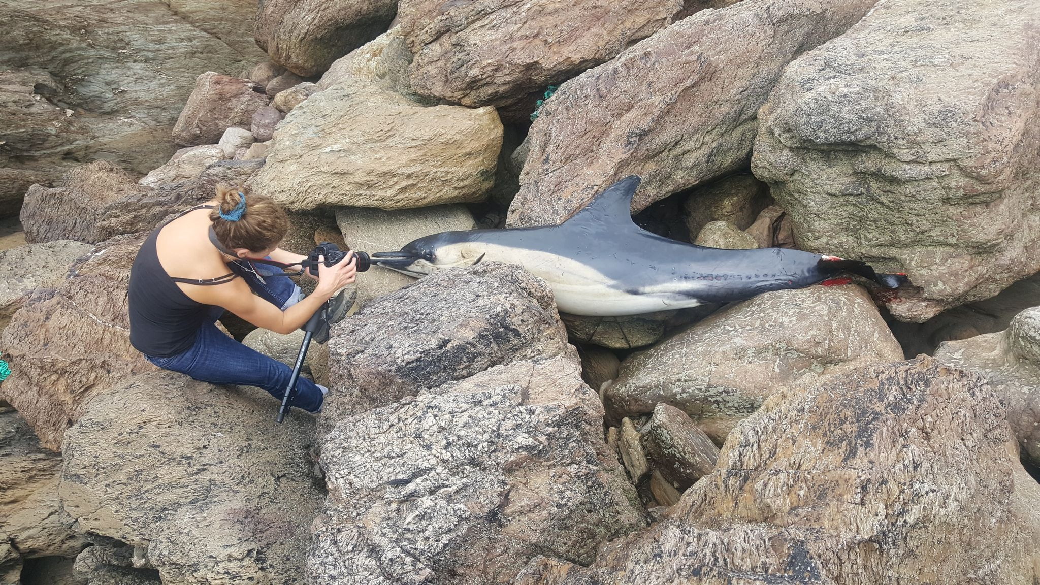 Cornwall Climate care gallery - dead dolphin