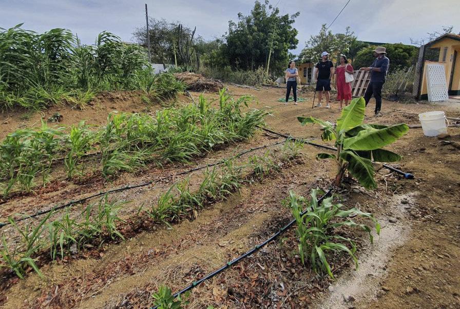 Tokenized Kolektivo Food Forest