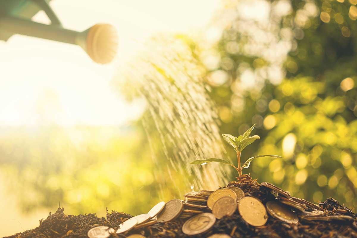 """Foto de uma pessoa regando uma """"muda de árvore de dinheiro""""."""