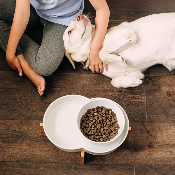 Dog Food Lagoon