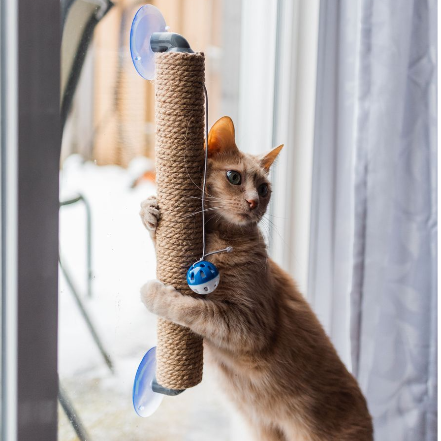 """The Window Wall Post"" Cat Scratcher"