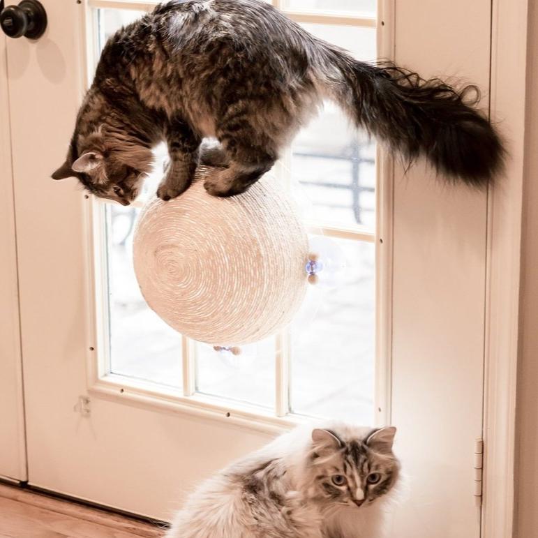 """The Window Wall Ball"" Suction Cat Scratcher"