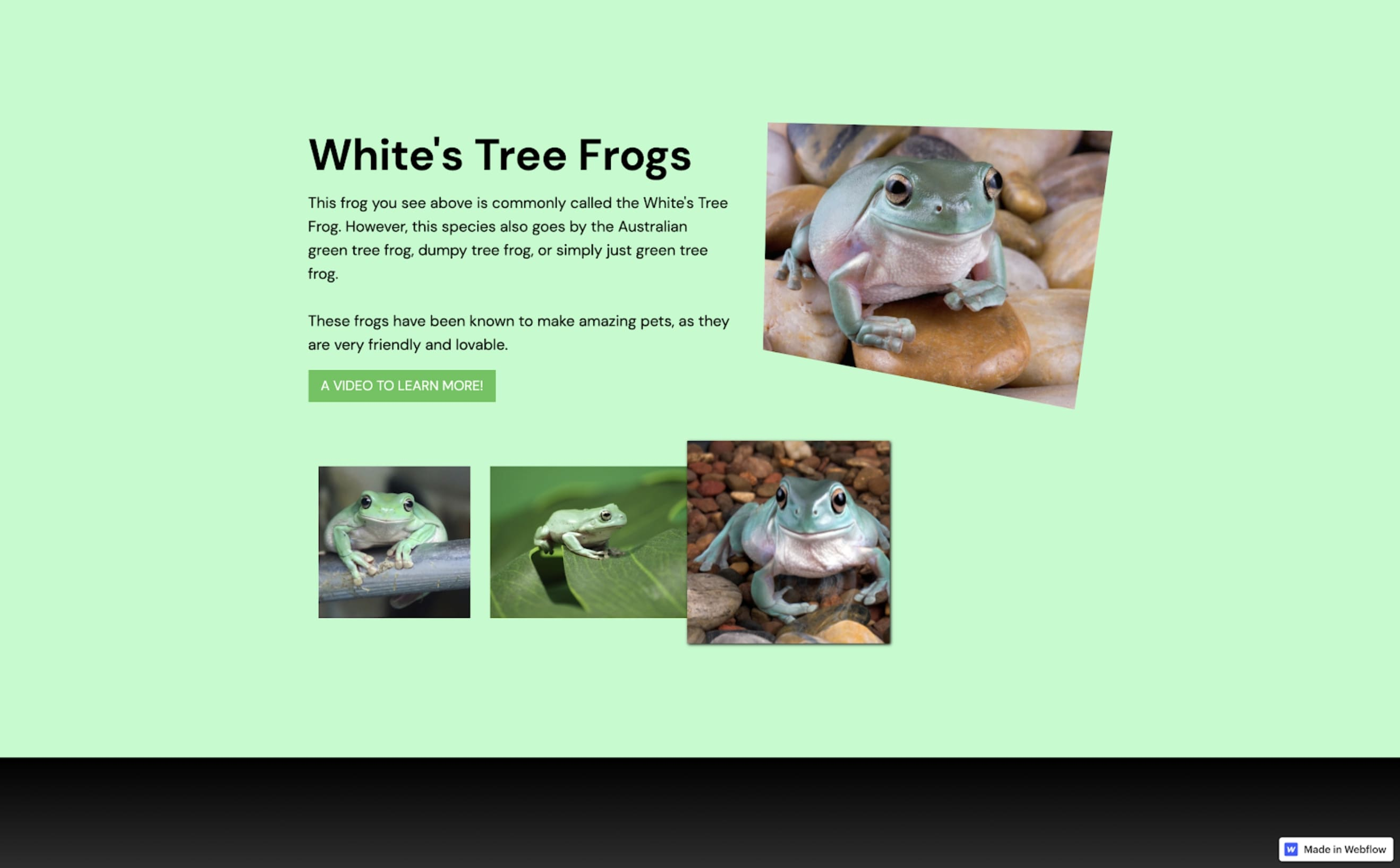 Example No Code Camp project of website with gallery and info about frogs