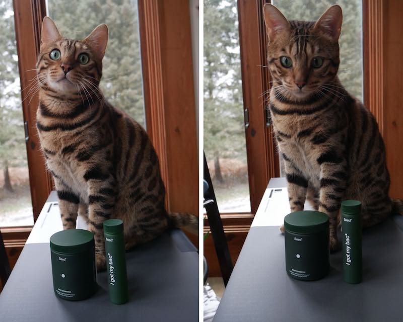 My cat Neo posing with Seed products