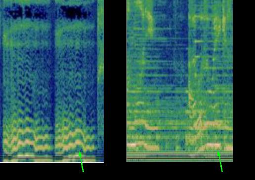 spectrogram humming digest
