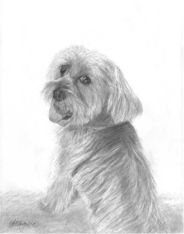 Pet portraits by Debra Portnoy