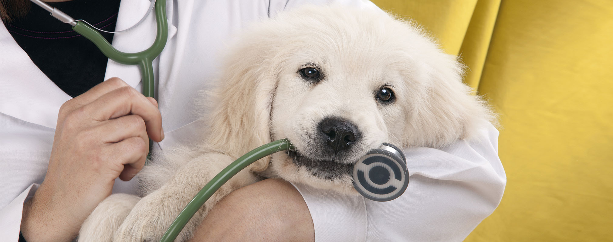 Need A Puppy Vaccination In Mandeville