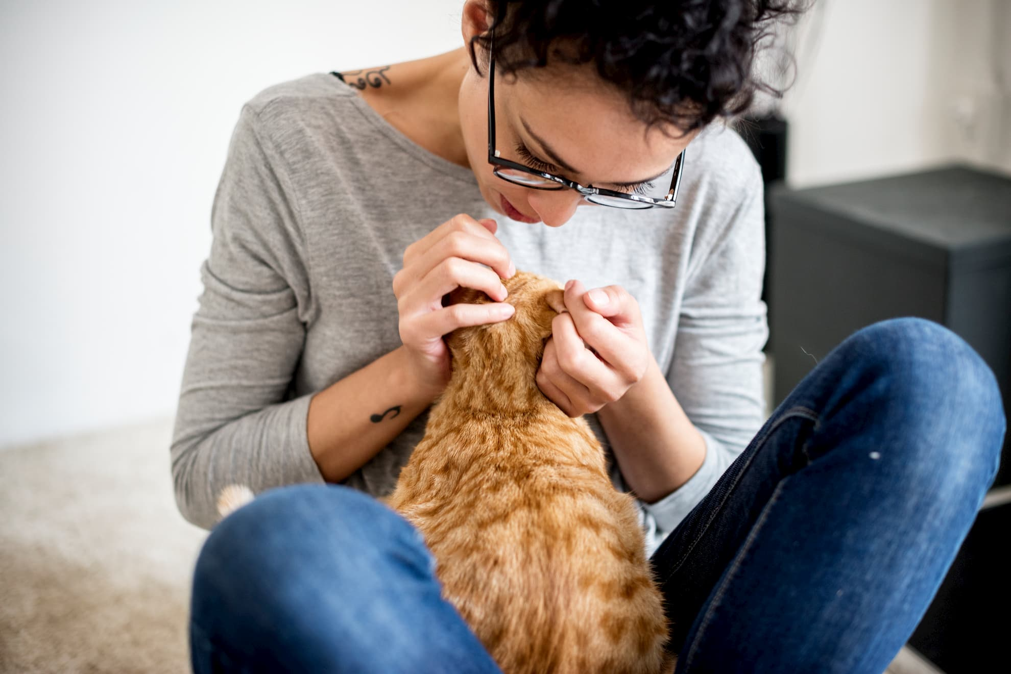 How to deal with Ear Mites in Cats in Mandeville?
