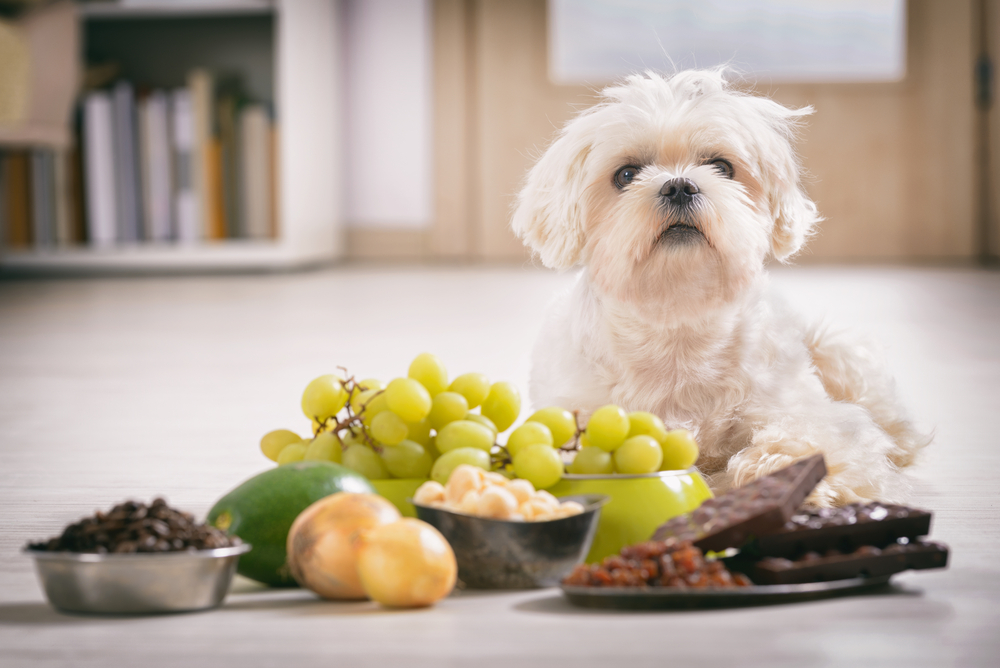Pet Poison Prevention and Treatment in Mandeville